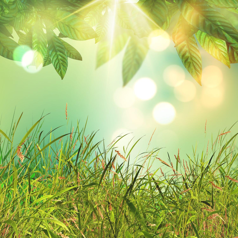 feuilles-herbes-soleil