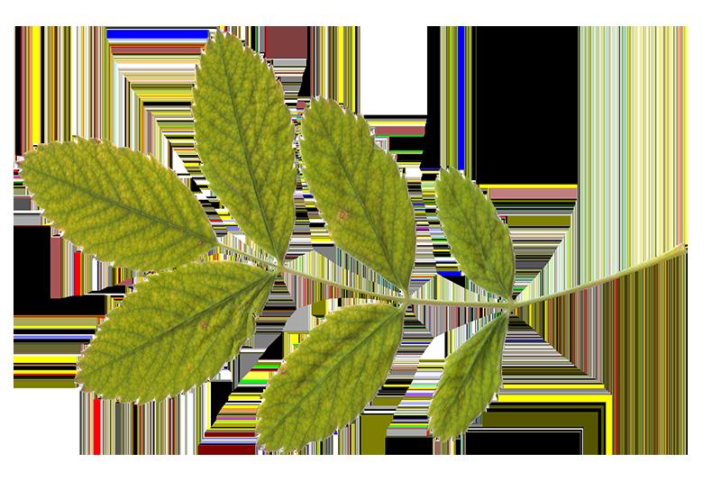 feuille-vertes-naturelles